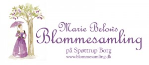 Blomme 1A-1